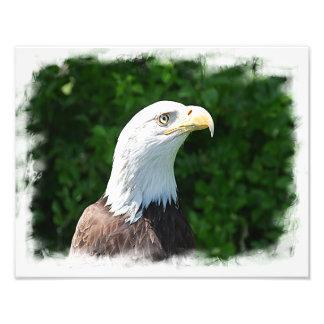 Retrato de uma águia americana impressão de foto