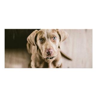 Retrato do cão 10.16 x 22.86cm panfleto
