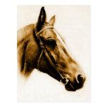 Retrato do cavalo cartão postal