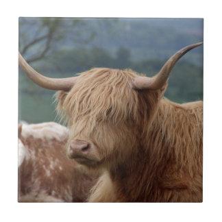 retrato do gado das montanhas