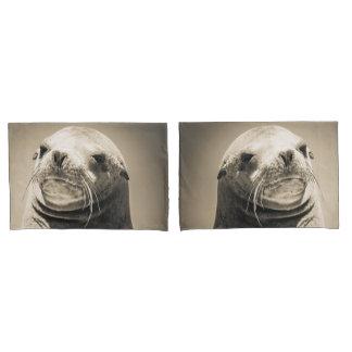 Retrato do leão de mar