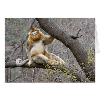 Retrato do macaco dourado masculino na árvore cartão