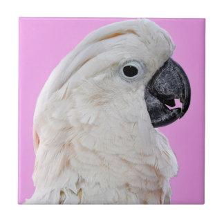 Retrato do pássaro do Cockatoo