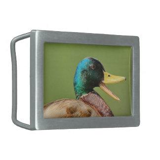 retrato do pato do pato selvagem