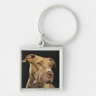 Retrato do pitbull vermelho do nariz com preto chaveiro