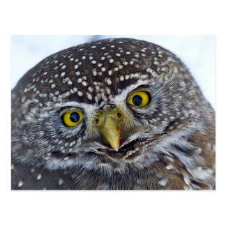 Retrato engraçado da coruja cartão postal