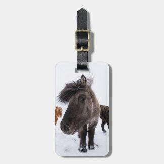 Retrato islandês do cavalo, Islândia Etiqueta De Bagagem