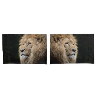Retrato masculino do leão no fundo preto