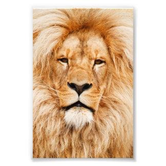Retrato orgulhoso do leão impressão de foto