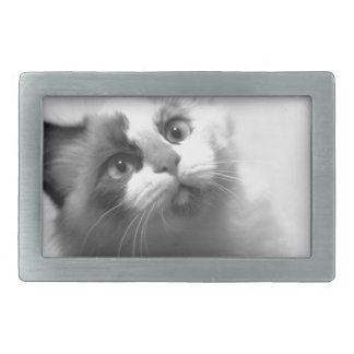 Retrato preto e branco do gatinho
