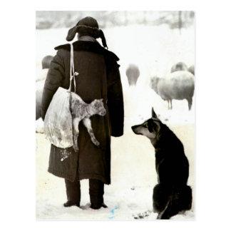 Reunião dos animais na neve cartão postal