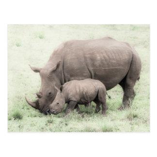 Rinoceronte & cartão brancos do bebê
