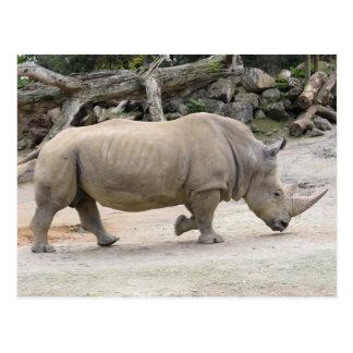 Rinoceronte no jardim zoológico de Auckland do Cartão Postal