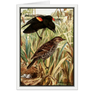 Robert Bruce Horsfall - melro Vermelho-Voado Cartão Comemorativo