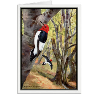 Robert Bruce Horsfall - pica-pau Vermelho-Dirigido Cartão Comemorativo