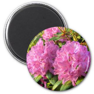 Rododendro cor-de-rosa II Imãs De Refrigerador