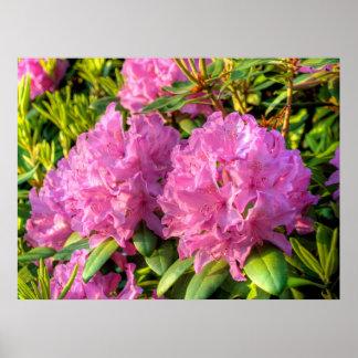 Rododendro cor-de-rosa II Poster