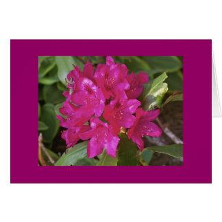 Rododendro, fuscia cartão