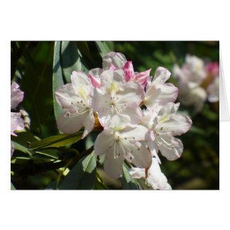 Rododendros 172 cartão