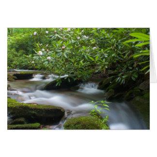 Rododendros no cartão de The Creek
