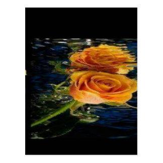 rosa amarela cartão postal