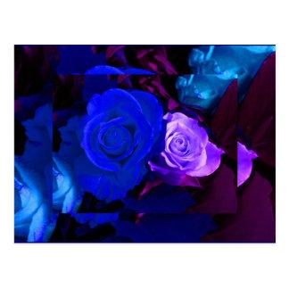 Rosa azul do roxo cartão postal