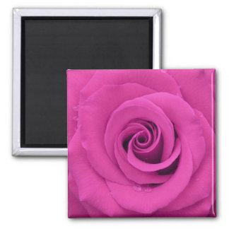 Rosa bonito do roxo com gotas da água ímã quadrado