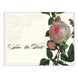 Rosa botânico do rosa, economias do Lilac o cartão