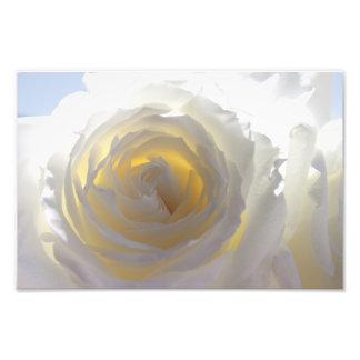 Rosa branco elegante impressão fotográfica
