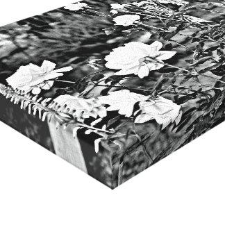 Rosa branco na arte preta das canvas do jardim