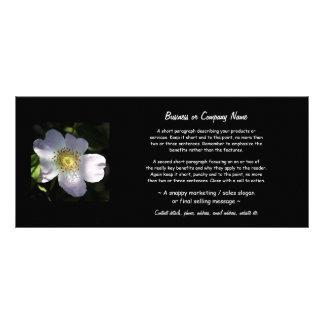 Rosa Canina - rosa de cão 10.16 X 22.86cm Panfleto
