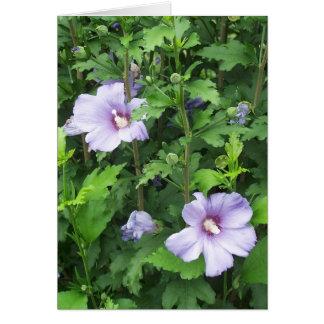 Rosa de flores do hibiscus de Sharon Cartão Comemorativo