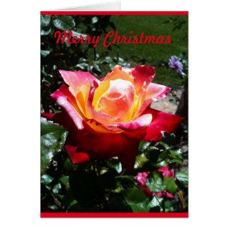 Rosa de Natal Cartão Comemorativo