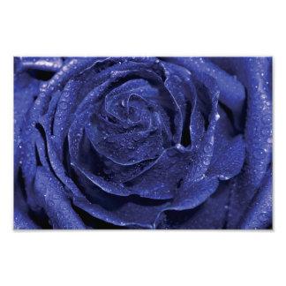 Rosa do azul impressão de foto