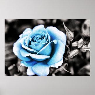 Rosa do azul pôsteres