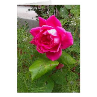 Rosa do rosa algum cartão da ocasião
