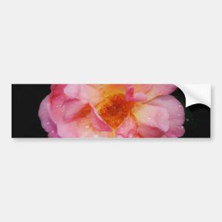 Rosa do rosa com fundo preto das gotas de orvalho adesivo