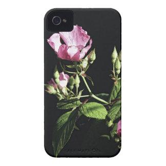 Rosa do rosa selvagem capinha iPhone 4