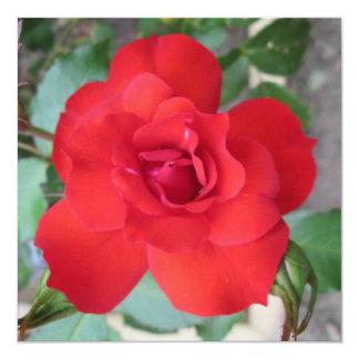 Rosa Roja Flor Convite Quadrado 13.35 X 13.35cm