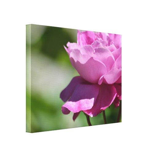 Rosa romântico do rosa impressão em canvas