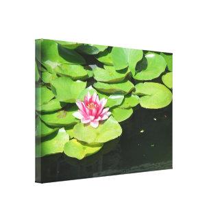Rosa sereno Lotus Waterlily da lagoa da força/verã Impressão De Canvas Envolvidas