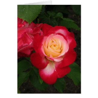 Rosa születésnapot-vermelho Húngaro-Boldog Cartão Comemorativo