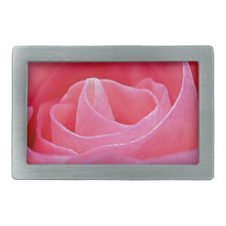 Rosa Unfurling do rosa