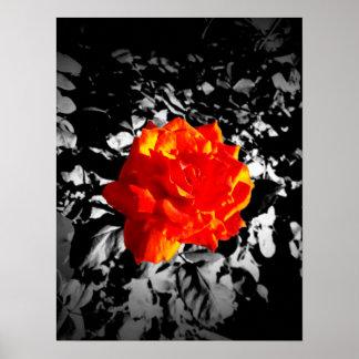 """Rosa vermelha 16"""" X12"""", papel de poster do valor"""