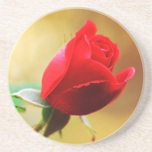 Rosa vermelha bonita porta-copo