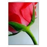 Rosa vermelha do amor cartao