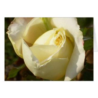 Rosas brancos românticos de CricketDiane do Cartão Comemorativo
