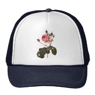 Rosas cor-de-rosa antigos do jardim do vintage na boné