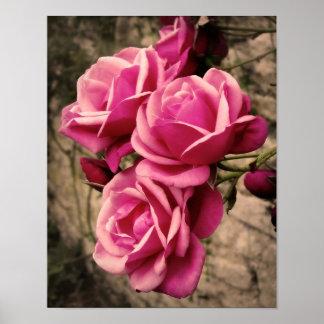 Rosas cor-de-rosa do Pirouette Pôsteres