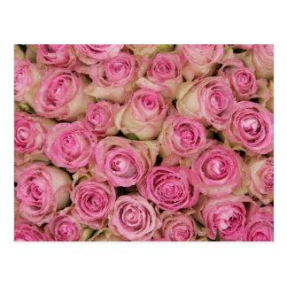Rosas cor-de-rosa Sparkling por TheRoseGarden Cartão Postal